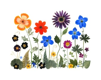 Pressed flower cards; set of 6 notecards, Vermont pressed flowers - #057