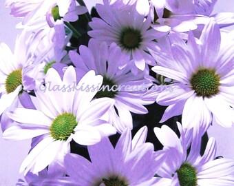 "Violet Daisies - Fine art Photography Print 8 x 10"""