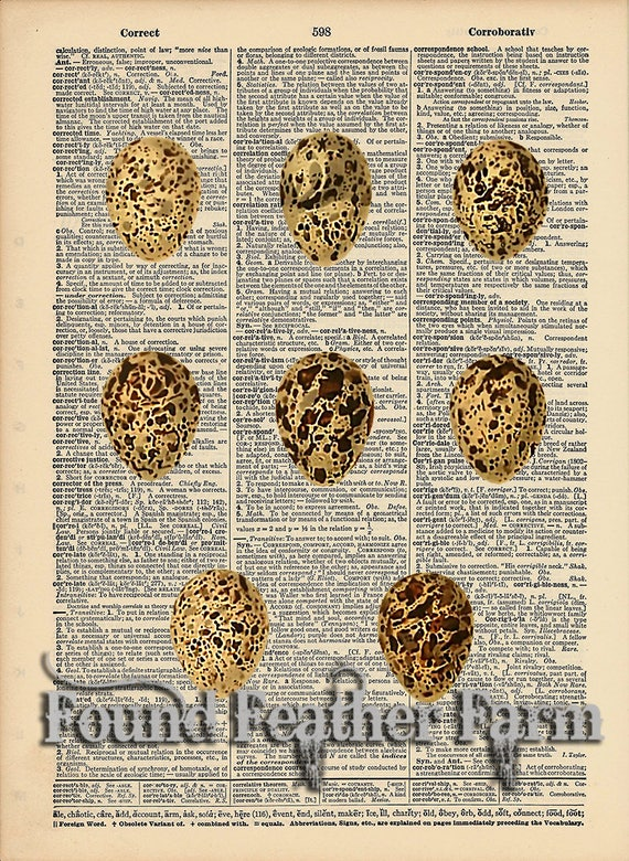 "Vintage Antique Dictionary Page with Antique Print ""Egg Selection Three"""