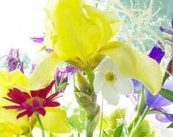 Yellow Iris Card,  a  Fine Art Photo Blank Card, Flower Greeting Card