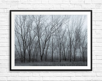 large forest art, large tree prints, large trees art, large blue art prints, large tree art prints, antique photo prints, vintage-look art