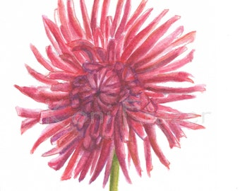 Dahlia watercolor painting, flower painting 5 x 7, most interesting flowers