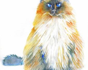 Watercolor Portrait of my Cat, Custom painting, Pet Portrait from original painting, Vio the Wonder Cat, ART