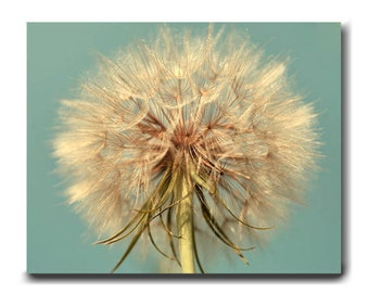 Dandelion canvas wall art, extra large wall art, Dandelion photography shabby chic decor, floral wall art botanical print, aque beige brown