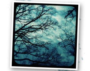 Blue trees - Nature - photo art signed 20x20cm