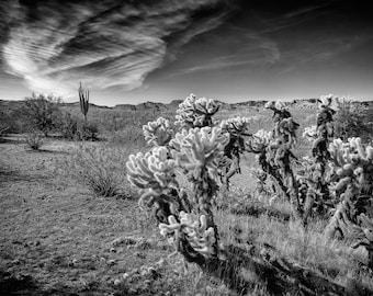 Arizona Landscape, Black and White, Highland Desert, Sand, Cactus, Saguaro, Cholla, Clouds, Wall Art, Home Decor