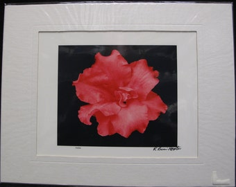 R. Lewis Hooten Uncommon Images Photograph Azalea Signed and Matted