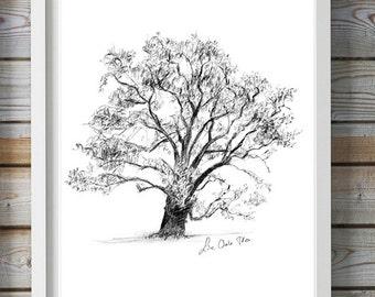 Live Oak Tree Art - tree drawing -  print - Wall art - Evergreen Oak Tree - Nature illustration - Zen drawing - Oak tree sketch - zen