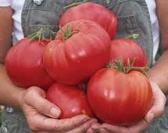Heirloom Tomato Seeds, Beefsteak Organically Farm Grown 25 Seeds
