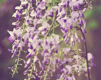 Frühling Blumen Fotografie - Fading Romantik - 8 x 10 Fine Art Prints - lila Glyzinien Lavendel lila grün Natur Wand Kunst Wohnkultur