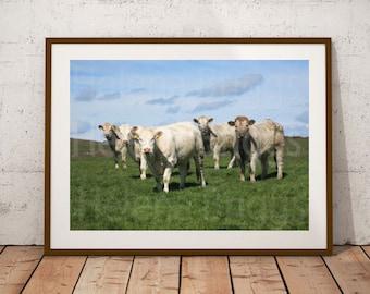 Farm Wall Art, Farm Wall Decor, Farm Prints, Farm Photography, Farm Photo, Farm Art, Farm Home Decor, Farm House Wall Decor, Farmhouse Decor