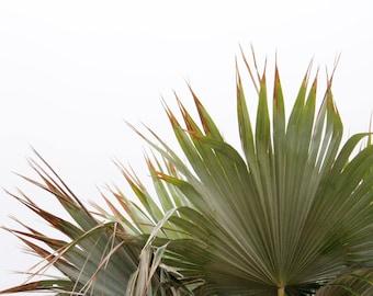 Botanical Bliss - Fine Art Photography