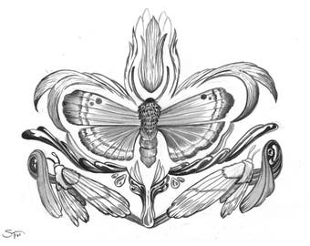 Moth Series No.1 Opodiphthera Eucalypti