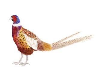 Woodland Bird Art, Pheasant Decor, Bird Painting, Pheasant Painting, Red, Orange, Blue
