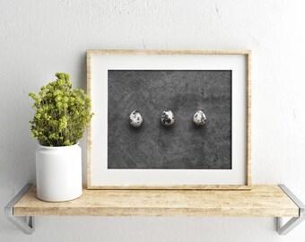 quail egg v. two // food photography print // kitchen decor // kitchen wall art  // dining room wall art // rustic wall art // egg print