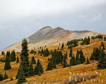 Orange, Grass, Green, Pine Trees, Autumn, Breckenridge, Summit, Boreas Pass, Colorado, Fine Art Photograph
