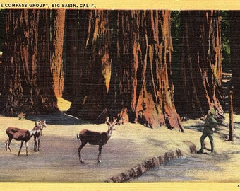 Big Basin, California, Compass Group, Deer - Postcard - Vintage Postcard - Unused (FF)
