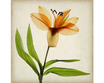 Lily Fine Art Print, Poster, Woodland Art, 12 x 12 Lilies Poster, Cottage Chic Decor, Scanner Art,  Flower Photography, Sheer X-Ray