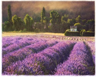 Lavender 5,  11x14 Original, Signed and Matted Fine Art Print