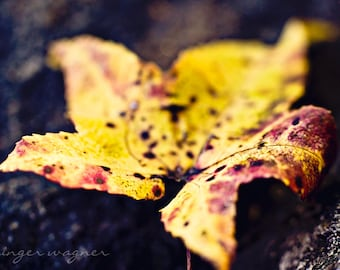 Autumn Nature Photography - Fallen - fine art print - 5 x 7 - nature leaf yellow red black rustic home decor
