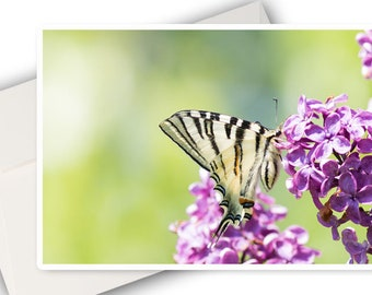 Greeting card photo butterfly and lilac flower, birthday, photo, butterfly photo card card