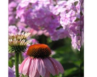 """Purple Cornflower & Hydrangeas Photo Canvas 10x8; stretched on .75"""" deep wooden  frame"""