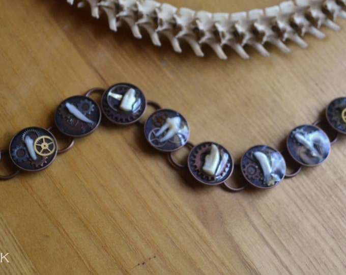 Real Animal Tooth Steampunk Themed Bracelet