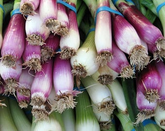 Deep Purple Bunching Onion Heirloom Garden Seed Non GMO 100+ Seeds Red Buncher Naturally Grown Open Pollinated Gardening