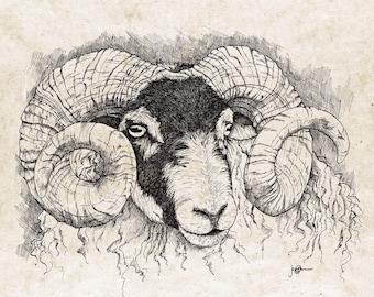 Scottish Blackface Ram Greetings Card