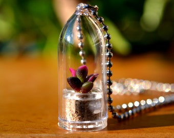 Live Succulent Necklace // Sunrise Succulent Terrarium Necklace