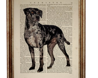 Catahoula Leopard Dog Gifts, Dogs Art Print Upcycled Dictionary Book Page Poster Wall Art, Gift For Dog Lover