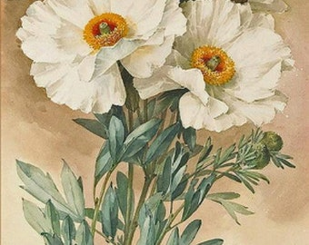 Matilija Poppies - Cross stitch pattern pdf format