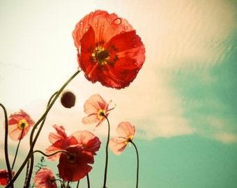 Poppy Photograph - Flower Art - Pink Red Poppy - Nature Flower - Wildflower - Poppy Flower - Blooming Poppy - NY Poppy - Nature Photograph