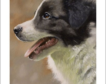 Border Collie Dog Portrait by award winning artist JOHN SILVER. Personally signed A4 or A3 size Print. BC001SP