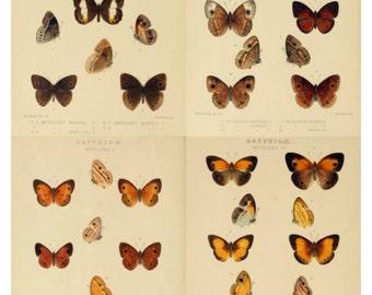 Butterflies V3 Collage Sheet, Vintage Book Page Illustrations, 1 Dollar Deal - Digital Download JPG File by Swing Shift Designs