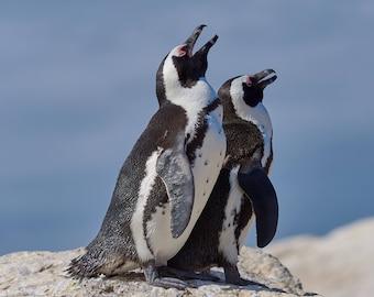 Penguins in Love as Digital Download