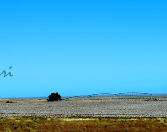 Southern Cotton Field Print  5x10 or Larger Landscape Picture Artistryi Photography