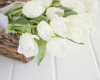 Fresh flowers stock photography | White tulips stock photo - Tulips stock photo - Flower stock photo - Neutral stock photo - Spring photo