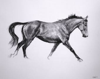SALE Original movement and energy based equine charcoal horse sketch drawing 'Lines II' by H Irvine