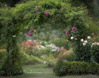 Digital Background of Botanical Flower Garden Arbor