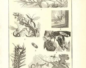 """Digital Download """"Moths"""" Illustration (c.1900s) - Instant Download Printable of Moths Illustrated Insect Book Page"""