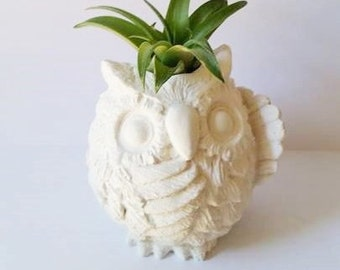 Owl air plant holder, owl planter, small owl planter, owl decor, wise owl gift