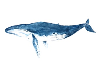 Humpback Whale Print - Watercolour Painting