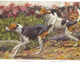 1919 Print Running Foxhounds English and American Foxhound by Louis Agassiz Fuertes