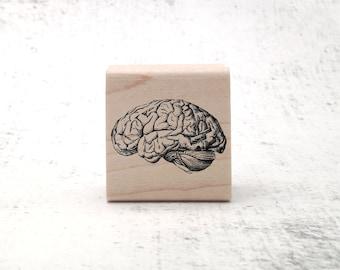 The Vintage Style Brain Stamp - Biology/Anatomy Illustration Rubber Stamp - Anatomical Stamp