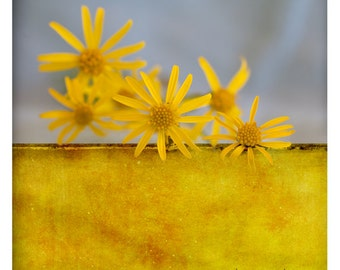 Pole Oeuf (Nature Photography - Fine Art Print - Flowers -  Botanical - Painting - Monochromatic - Wall Art   - Color Block - Gold Yellow)