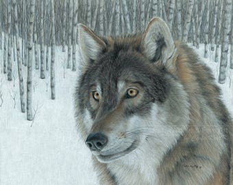 Wolf Art WOLF IN ASPENS by Carla Kurt signed Print 11 x 14