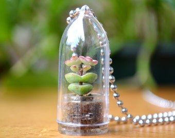 Live Succulent Necklace // Baby's Necklace Terrarium Necklace