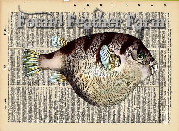 """Vintage Antique Dictionary Page with Antique Print """"Puffer Fish"""""""