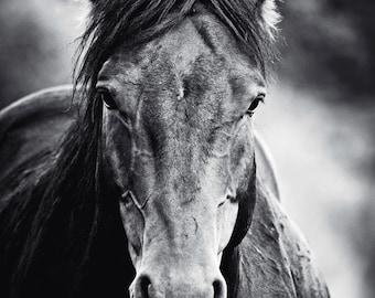 Wild Horse Modern Wall Art - Black Stallion Black and White Monochrome Animal Fine Art Photography